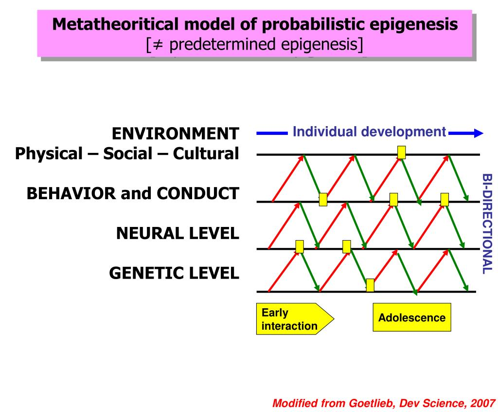 PPT - Probabilistic epigenesis of externalizing disorders in