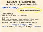 estructura i metabolisme dels compostos nitrogenats no proteics3