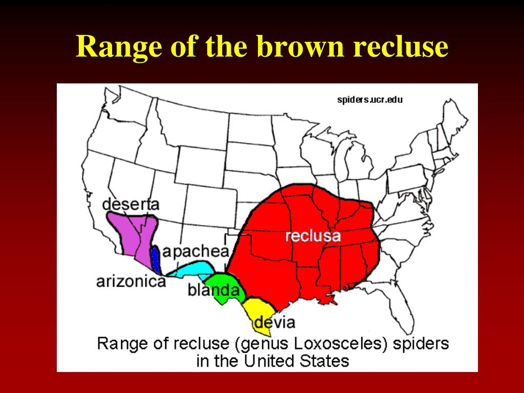 Range of the brown recluse