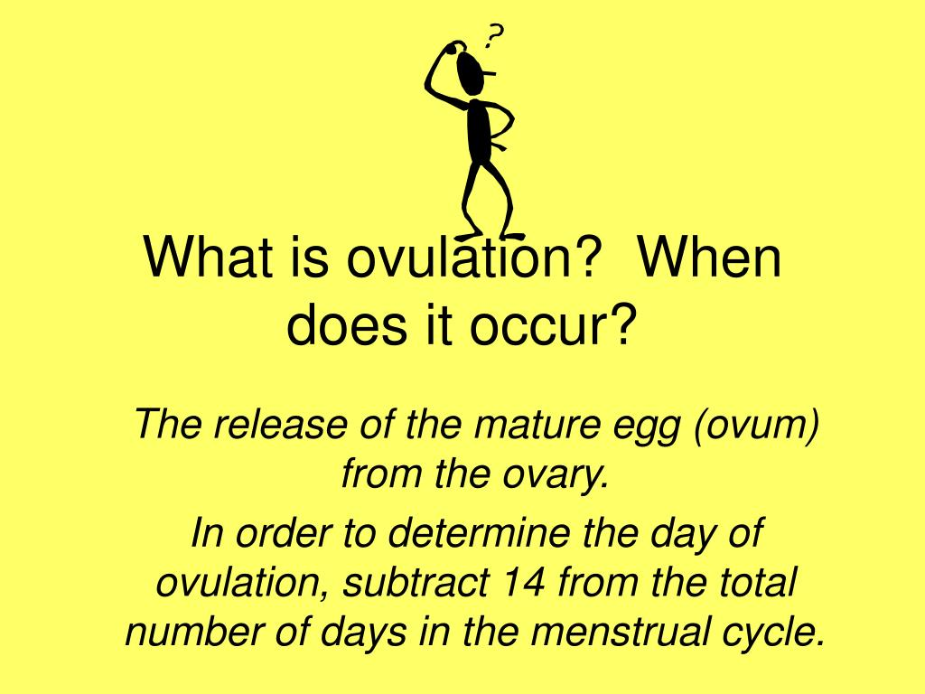 What is ovulation?  When does it occur?