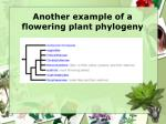 another example of a flowering plant phylogeny