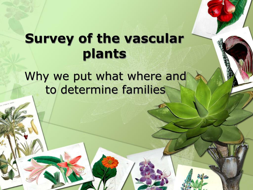 survey of the vascular plants l.