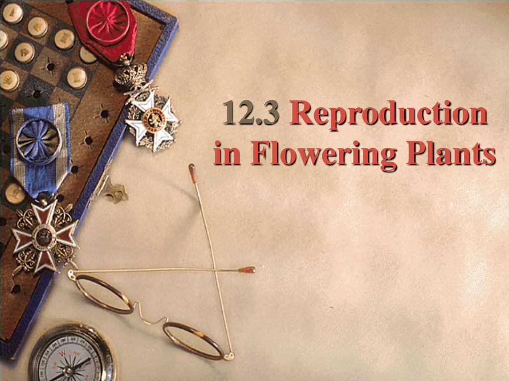 12 3 reproduction in flowering plants l.