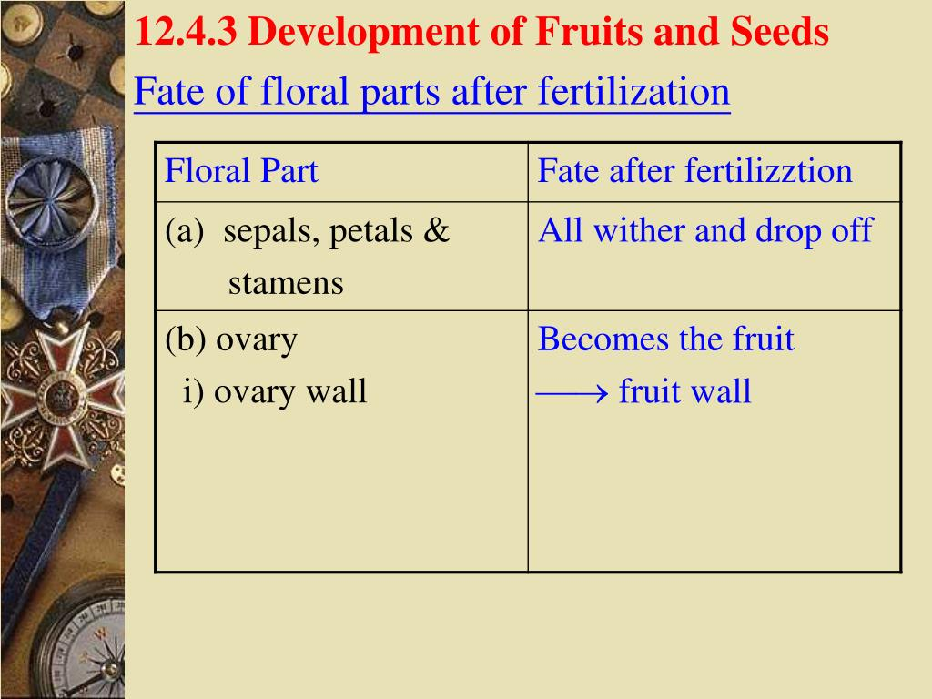 12.4.3 Development of Fruits and Seeds