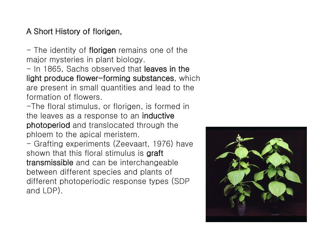A Short History of florigen,