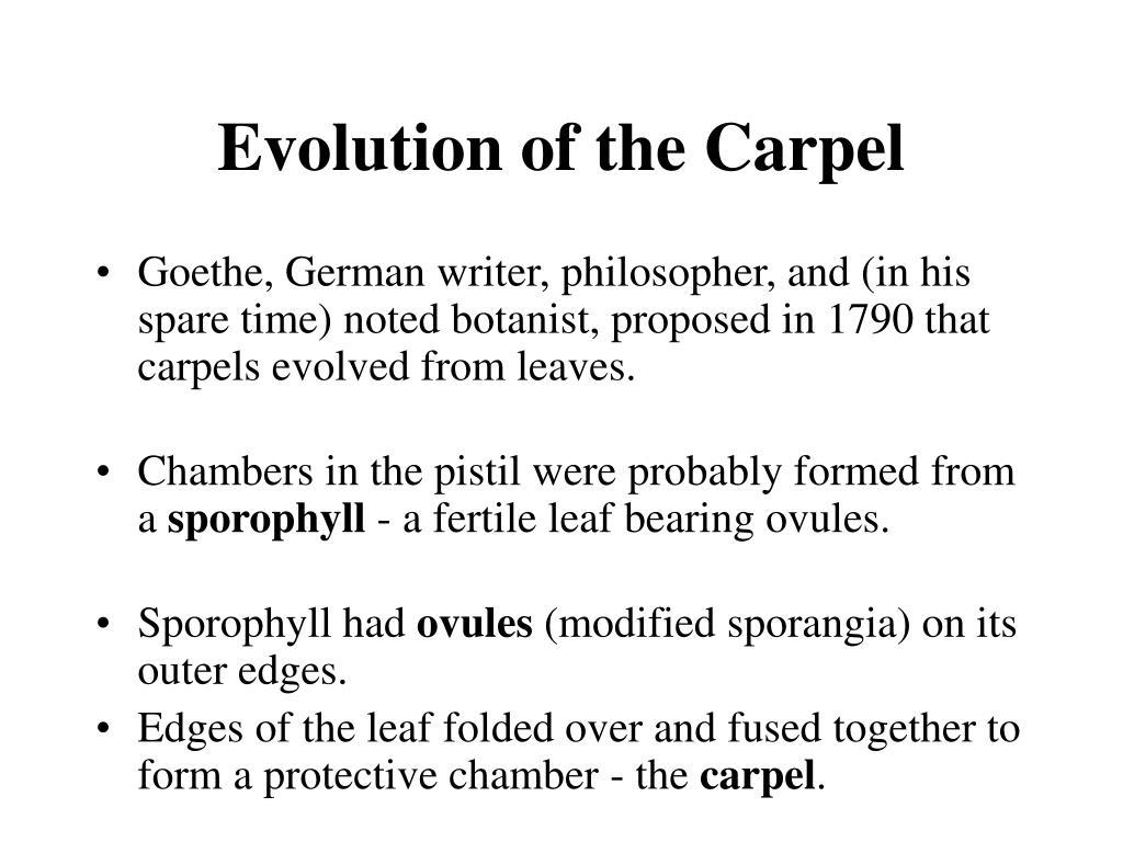 Evolution of the Carpel