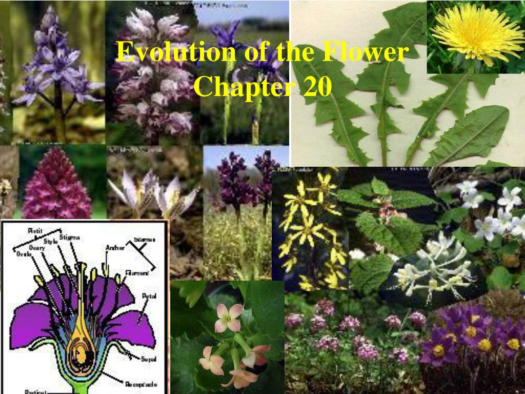 evolution of the flower chapter 20 l.