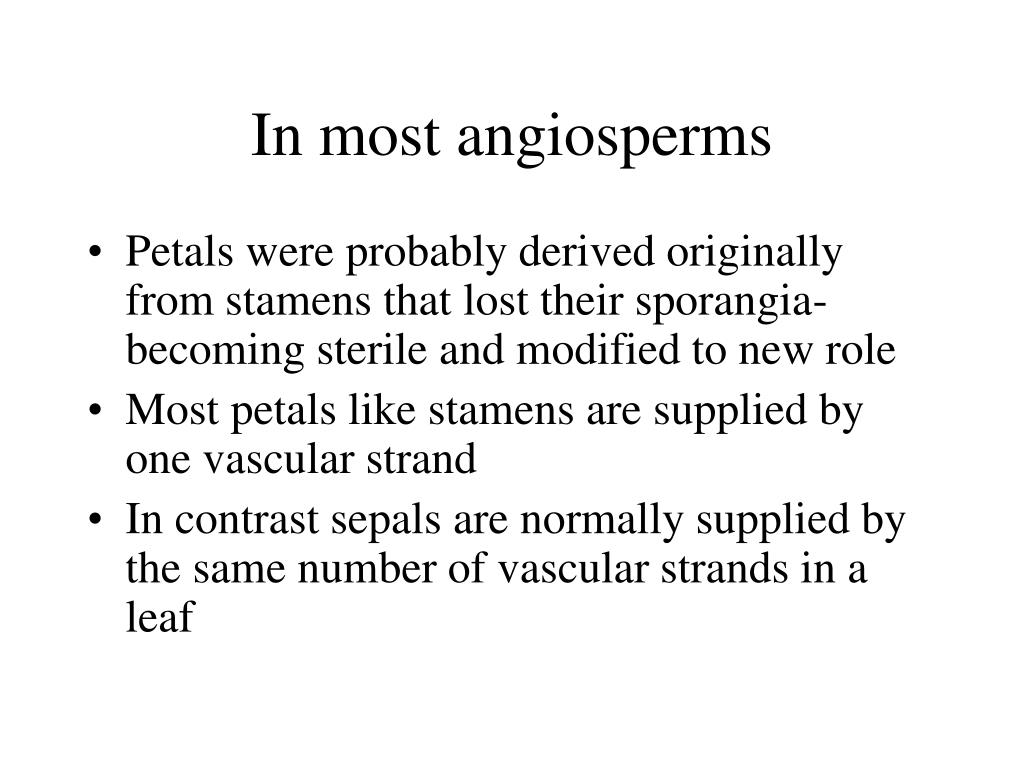 In most angiosperms