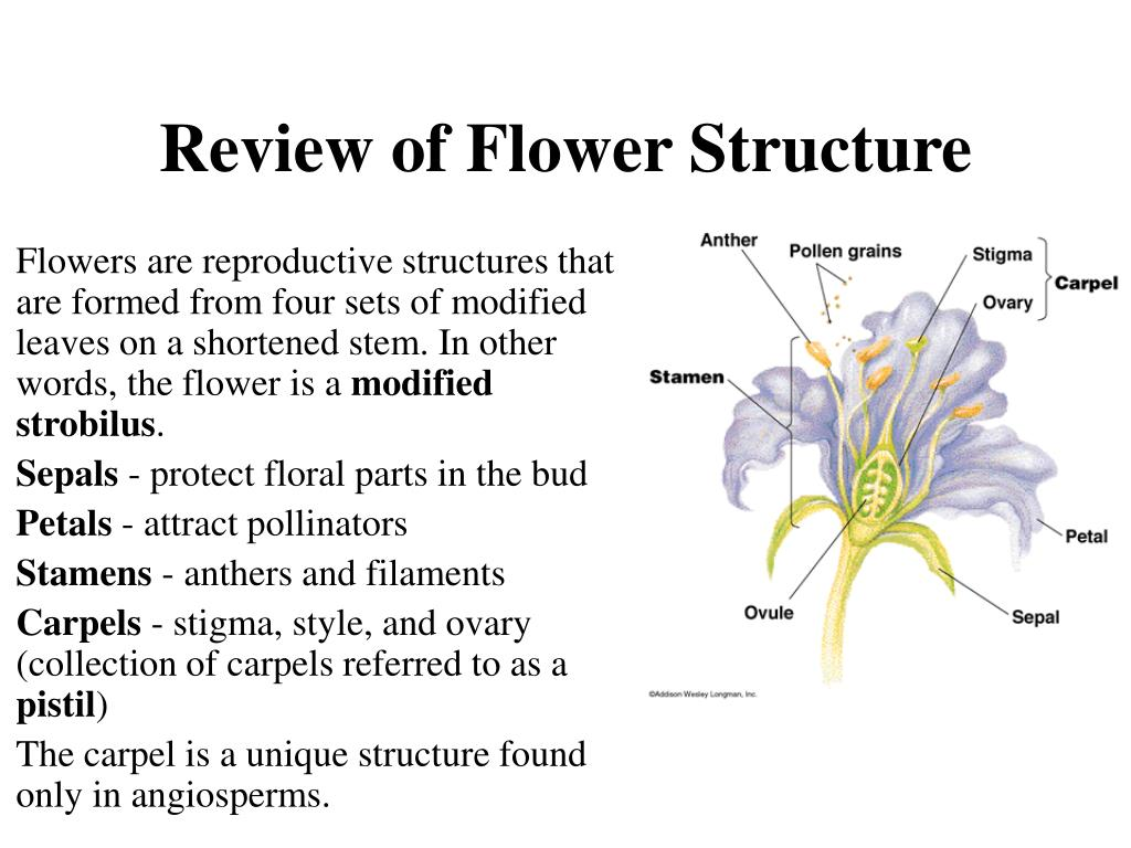 Review of Flower Structure
