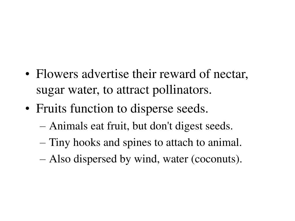 Flowers advertise their reward of nectar, sugar water, to attract pollinators.