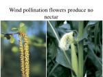 wind pollination flowers produce no nectar