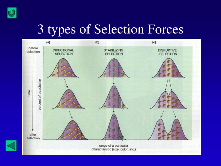 3 types of Selection Forces