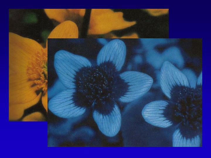 Bee Vision in UV