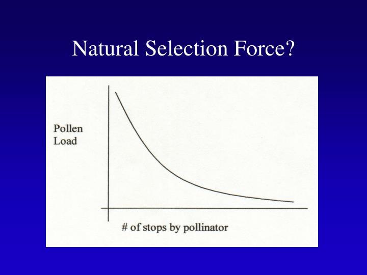 Natural Selection Force?