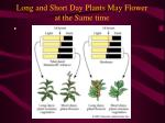 long and short day plants may flower at the same time1