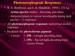 photomorphogenic responses2