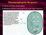 photomorphogenic responses7