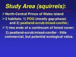 study area squirrels