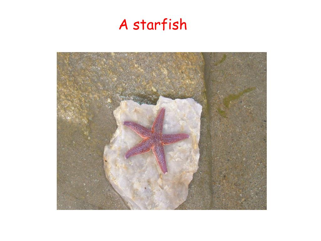 A starfish