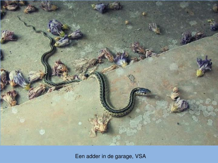 Een adder in de garage, VSA