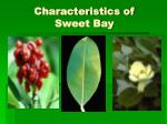 characteristics of sweet bay