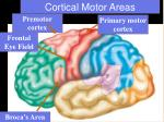 cortical motor areas