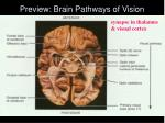 preview brain pathways of vision