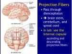 projection fibers