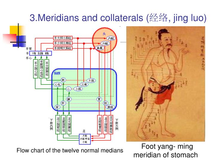 3.Meridians and collaterals (