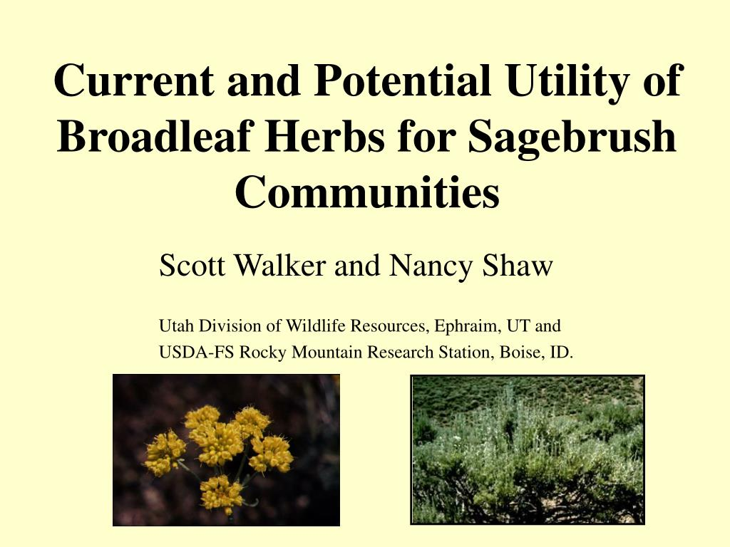 current and potential utility of broadleaf herbs for sagebrush communities l.