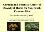 current and potential utility of broadleaf herbs for sagebrush communities