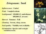 eriogonum seed