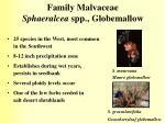 family malvaceae sphaeralcea spp globemallow