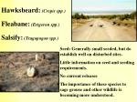 hawksbeard crepis spp fleabane erigeron spp salsify tragopogon spp