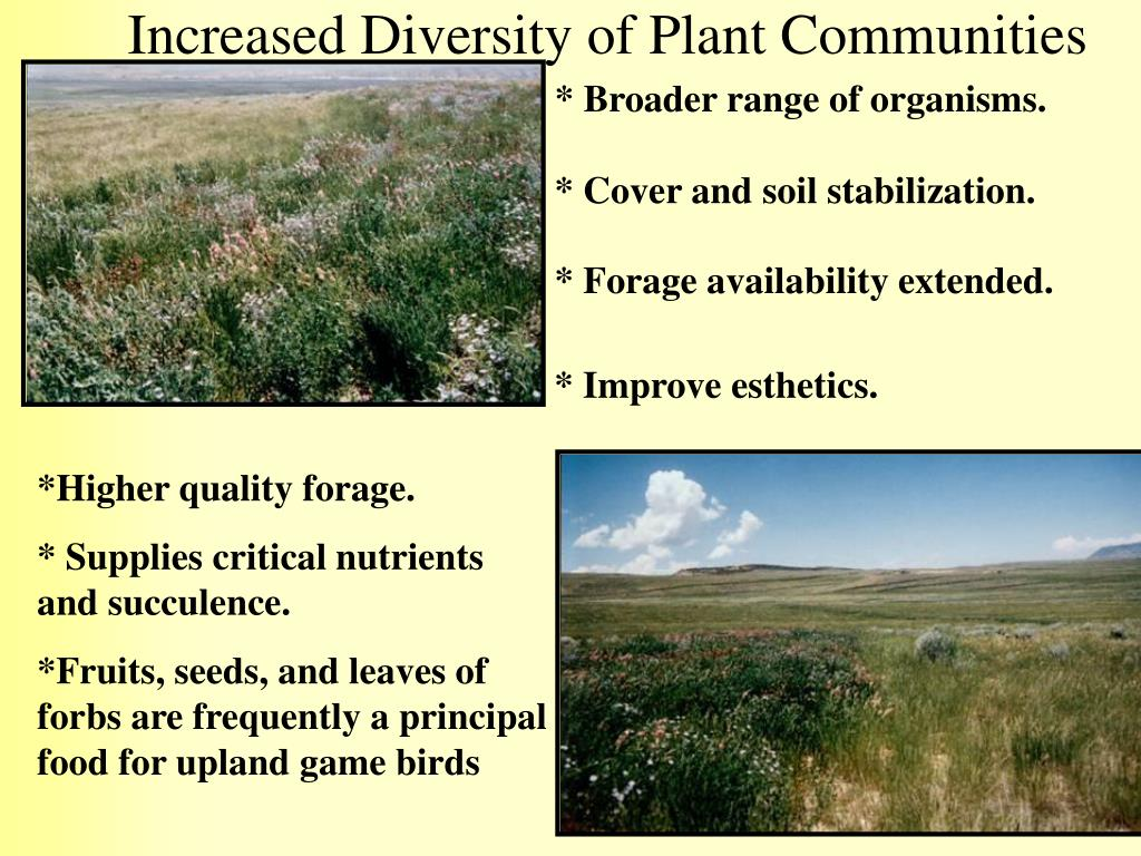 Increased Diversity of Plant Communities