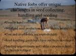native forbs offer unique challenges in seed collecting handling and seeding