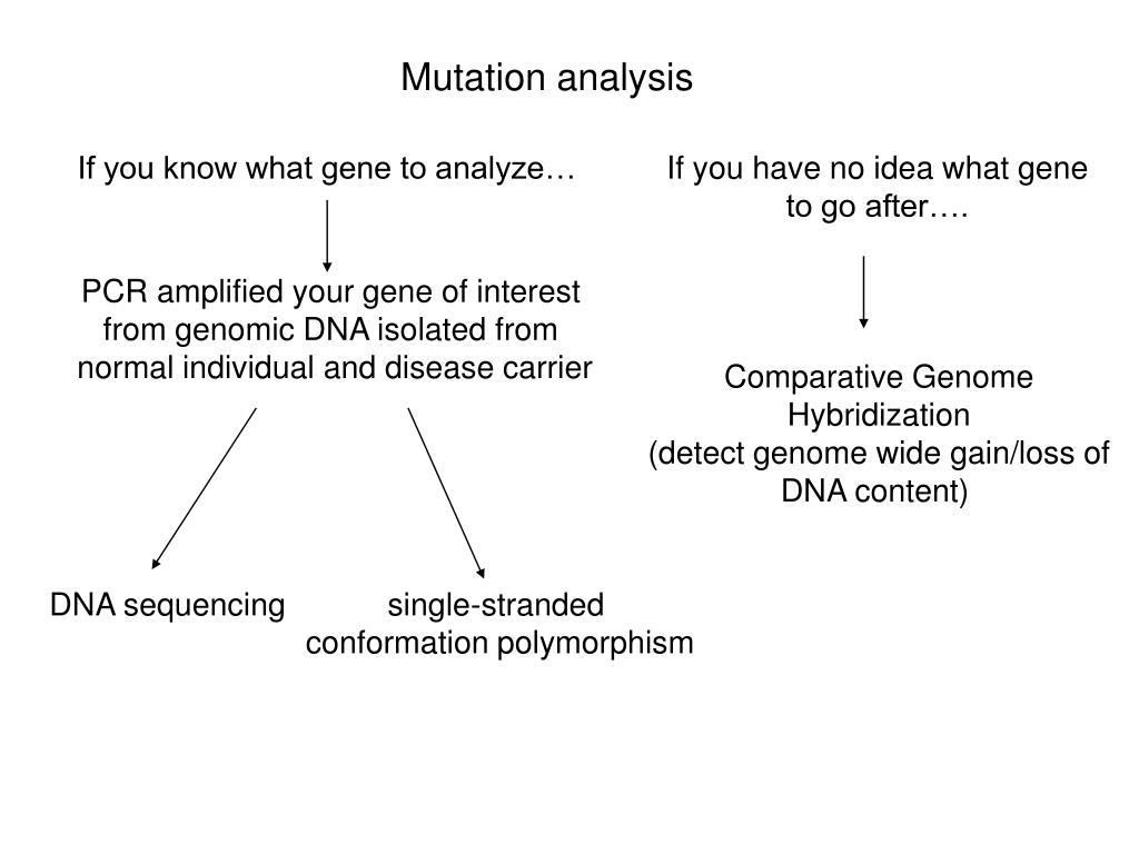 Mutation analysis