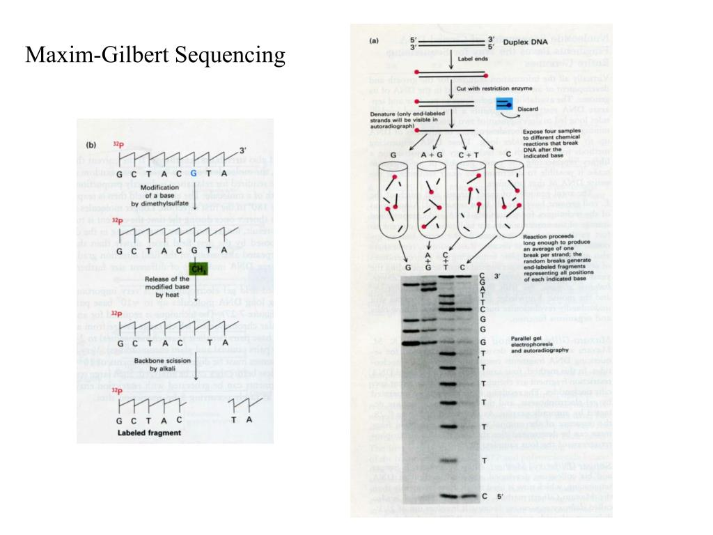 Maxim-Gilbert Sequencing