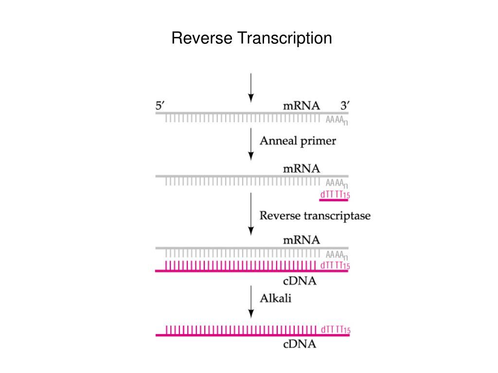 Reverse Transcription