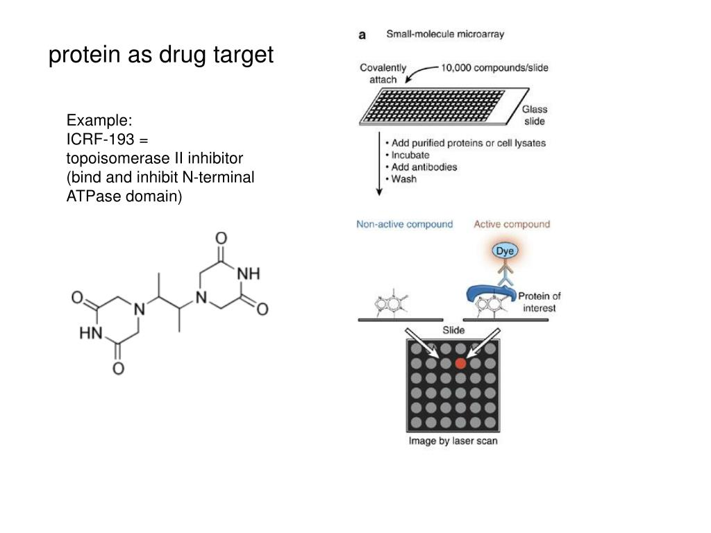 protein as drug target