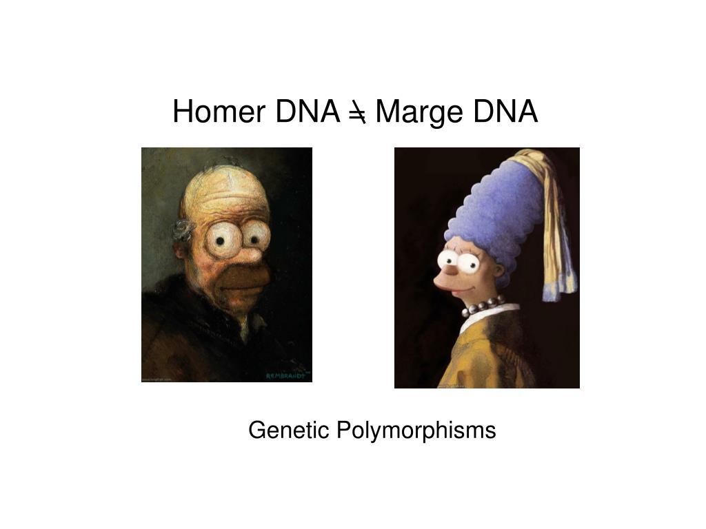 Homer DNA = Marge DNA