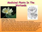 medicinal plants in the wetlands
