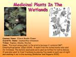 medicinal plants in the wetlands1