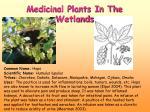 medicinal plants in the wetlands2