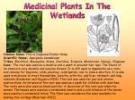 medicinal plants in the wetlands3