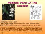 medicinal plants in the wetlands4