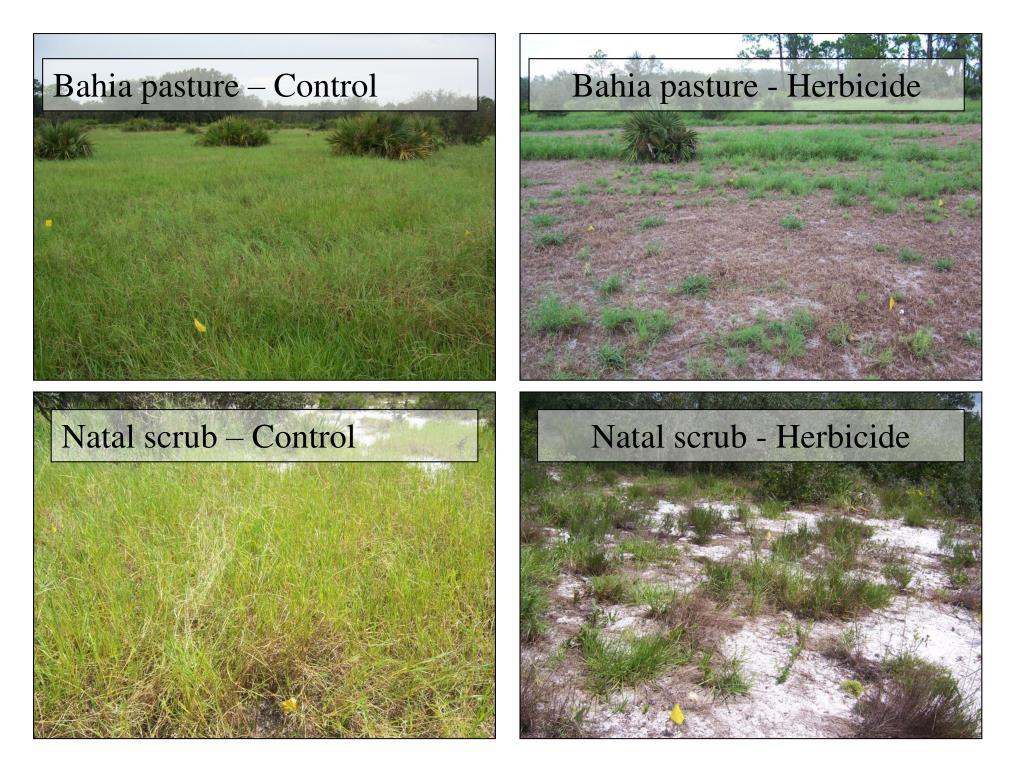 Bahia pasture – Control