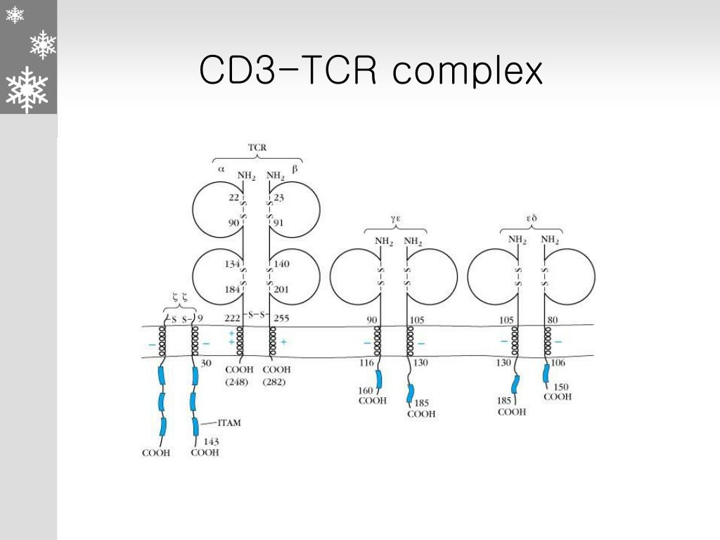 CD3-TCR complex
