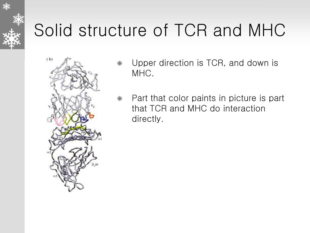 Solid structure of TCR and MHC