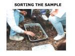 sorting the sample
